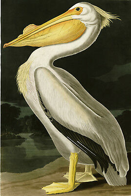 Art Painting Print On Canvas Ready to Hang Audubon Stork Pelican Museum Quality