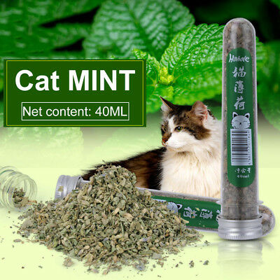 New 40ML Natural Catnip Pet Cat Chewing Mint Leaves Mouth Freshing Cleaning Tool