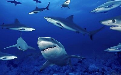 Sharks Picture on Canvas/ Wall Art - 4 Sizes Available! Ref:300
