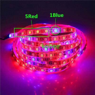 5050 LED Grow Lights Waterproof DC12V Red Blue 3:1, 4:1, 5:1,for Plant Growing