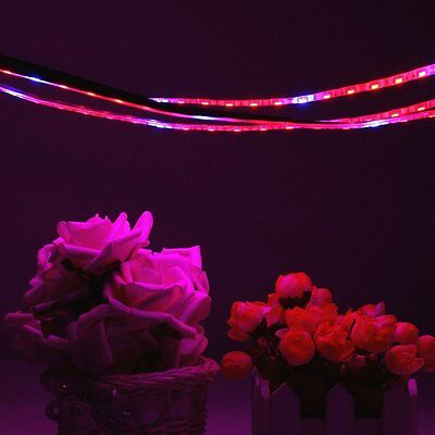 5M LED Grow Light Full Spectrum Lamp Blue Red For Greenhouse Hydroponic Plant DC
