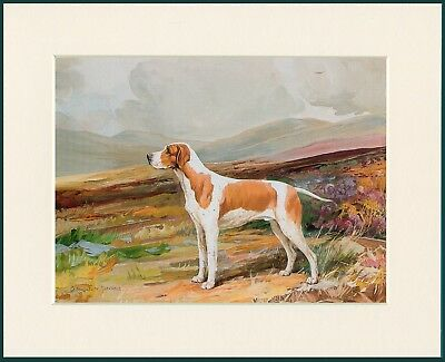 Pointer Standing Dog Great Dog Print Mounted Ready To Frame