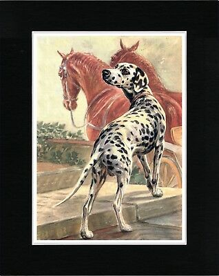 Dalmatian Dog And Horses Lovely Vintage Style Dog Art Print Ready Matted