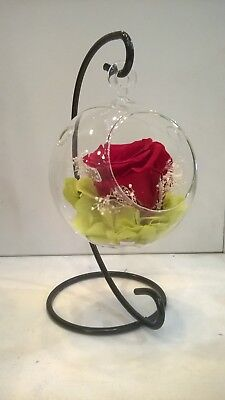 preserved flowers red rose last up to 5 years