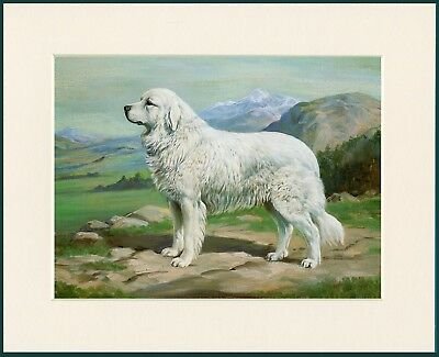 Pyrenean Mountain Dog Lovely Print Mounted Ready To Frame