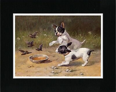 FRENCH BULLDOG TWO DOGS LOVELY VINTAGE STYLE IMAGE DOG PHOTO PRINT READY MATTED