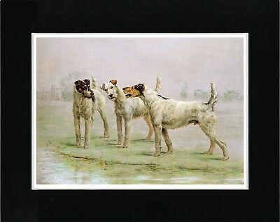 Wire Fox Terrier Group Of Three Dog Lovely Vintage Style Dog Print Ready Matted