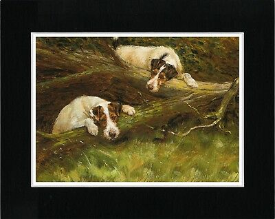 Wire Fox Terrier 2 Dogs Play In Tree Lovely Vintage Style Dog Print Ready Matted