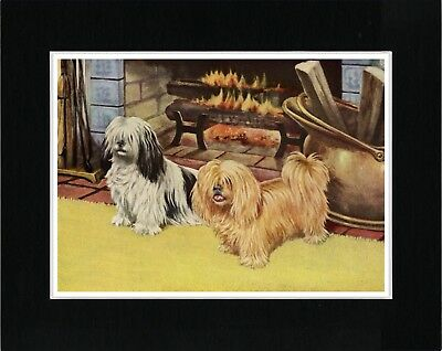 Lhasa Apso Two Dogs Lovely Vintage Style Dog Art Print Ready Matted