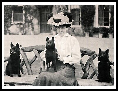 Schipperke Lady And Her Dogs Vintage Style Dog Photo Print Poster