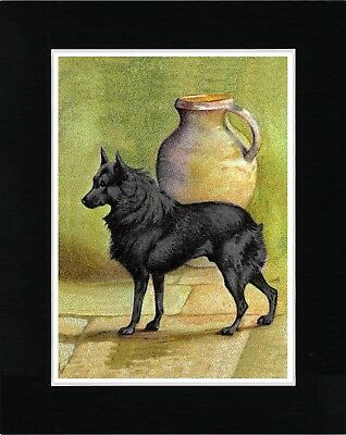 Schipperke Lovely Vintage Style Dog Art Print Matted Ready To Frame