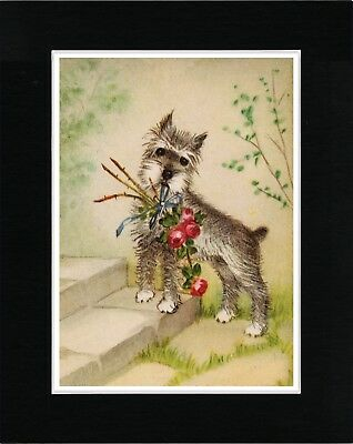 Schnauzer With Bunch Of Flowers Lovely Vintage Style Dog Art Print Ready Matted