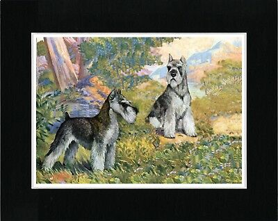 Schnauzer Two Dogs Lovely Vintage Style Dog Art Print Ready Matted