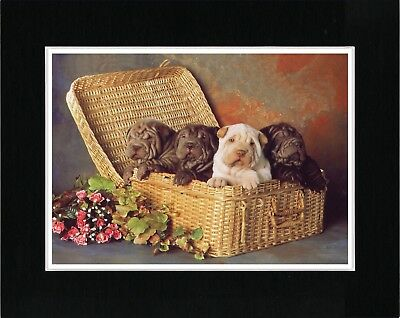 Shar Pei Puppies In A Basket Lovely Dog Print Matted Ready To Frame