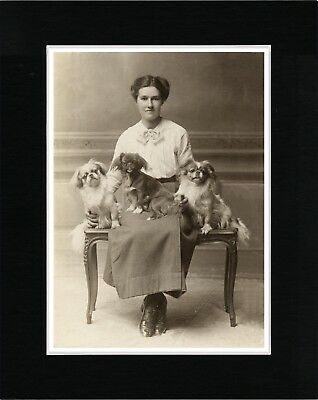 Tibetan Spaniel Lady And Dogs Vintage Style Dog Photo Print Ready Matted