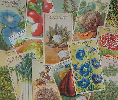 14 Different Old 1920's Lithograph Flower Herb & Vegetable Seed Packet Labels