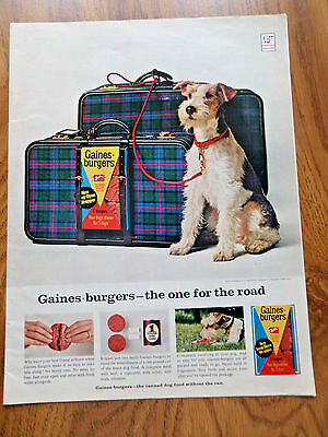 1965 Schnauzer Airedale Terrier Dog Ad  Gaines Burgers