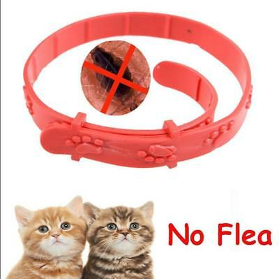 Pet Dog Cat Flea Collar Against Anti Tick Quick Kill Remove Protect Repel Rubber