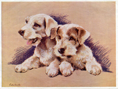 SEALYHAM TERRIER ANTIQUE DOG ART PRINT  Puppies