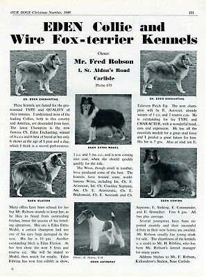 Collie Dog Breed Kennel Advert Print Page Eden Kennel Our Dogs 1948