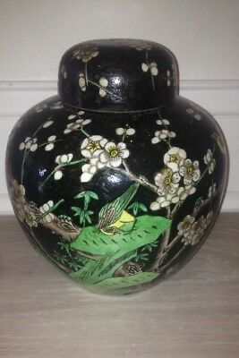 Chinese Xangxi Style 19th Century Antique Noir Ginger Jar Birds and Prunus Look!