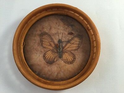 Taxidermy retro vintage pressed Butterfly bamboo wicker display drinks coaster