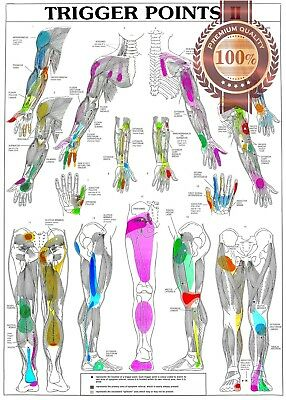 New Trigger Points 2 Two Anatomical Diagram Chart Anatomy Print Premium Poster