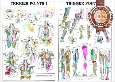 New Trigger Points 1 & 2 Anatomical Diagram Chart Anatomy Print Premium Poster