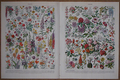 Flowers Antique lithograph DOUBLE PAGE French COLOR LITHOGRAPH Print by Millot