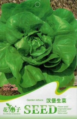 Original Package 30 Green Burger lettuce Seed Lactuca Sativa Delicious Seed C149