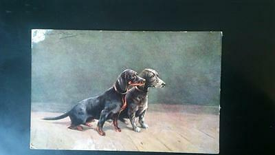 Carte postale chiens teckels illustrateur