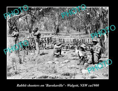 OLD LARGE HISTORIC PHOTO OF RABBIT TRAPPING TEAM, RABBITEERS, WALGETT NSW ca1900