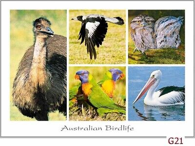 28 Australian Animal & Bird Postcards - kangaroos, emu, koala, possums, dolphin