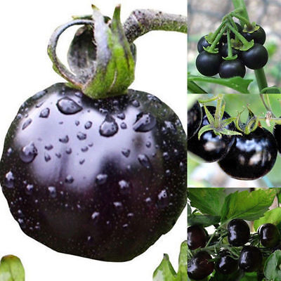 50pcs Rare Tomato Seeds Black Cherry Russian Heirloom Vegetable Fruit Seeds