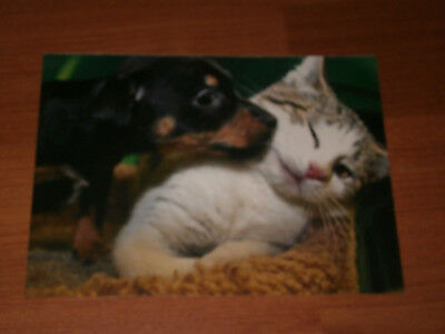 Carte postale Veeweyde - Chien & chat 5