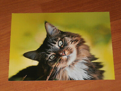 Carte postale Veeweyde - Chat 4
