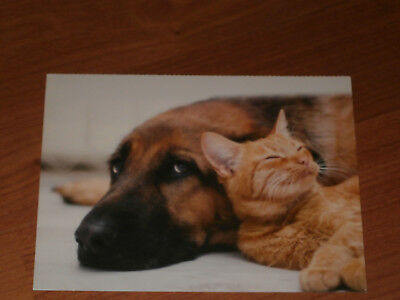 Carte postale Veeweyde - Chien & chat 9