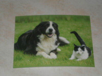 Carte postale Veeweyde - Chien & chat 10