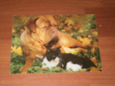 Carte postale Veeweyde - Chien & chat 2