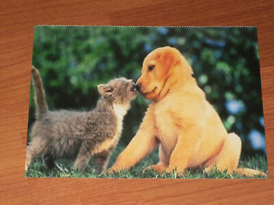 Carte postale Veeweyde - Chien & chat 7