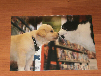 Carte postale Veeweyde - Chien & chat 6