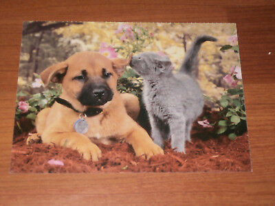 Carte postale Veeweyde - Chien & chat 3
