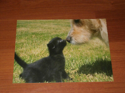 Carte postale Veeweyde - Chien & chat 4