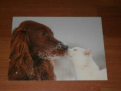 Carte postale Veeweyde - Chien & chat 1