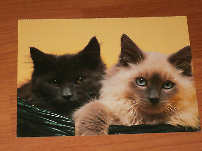 Carte postale Veeweyde - Chat 3