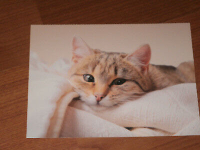 Carte postale Veeweyde - Chat 5