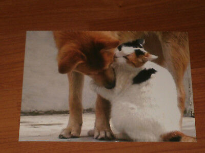 Carte postale Veeweyde - Chien & chat 8