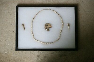 Rare Cherokee Conch Shell Ear Plugs/Beads Indian Artifacts Authentic Frame #123