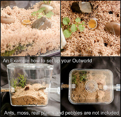 Small Ant Spider Arena Formicarium Farm Ant Housing Your ant colony's outworld