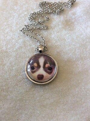 Dog Lovers! Chihuahua Dog Necklace/pendant. Adorable!